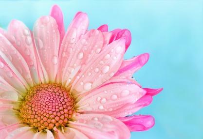 flower-3140491_1920
