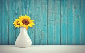 sunflower-3292932_1920